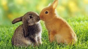 cuterabbit