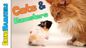 cats and hamsters