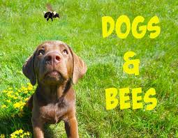 dogbees