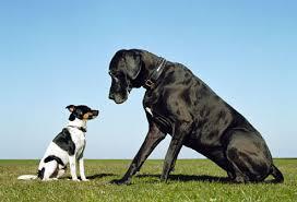 dogbogsmall