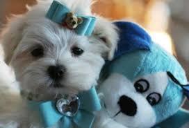 puppyaccess