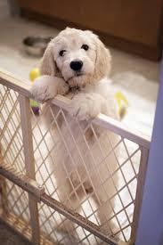 puppyhome