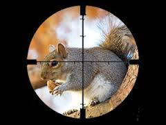 shootsquirrel