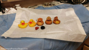 Rubber ducks that were found in dogs stomach