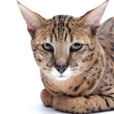 oldercat