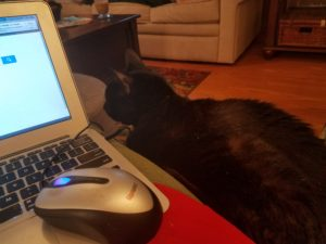 Molly with me as I write this blog!
