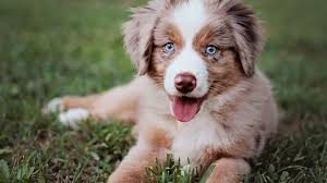 cutyydog