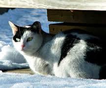 catoutdoorwinter