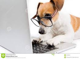 computerdog