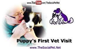puppys-firstvet-visit