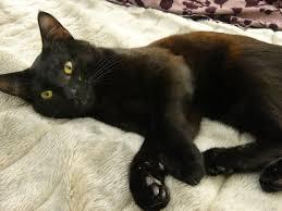 blackcat-bed