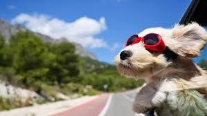 dogheadoutof-car