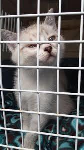 sheltercat