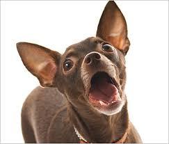 Does Ignoring Dog Barking Work
