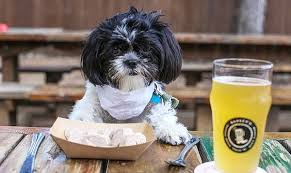 Do Dogs In Restaurants Really Pose A Health Risk? « The Pet