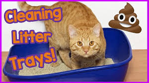 Cleaning Your Litter Box Thoroughly The Pet Product Guru
