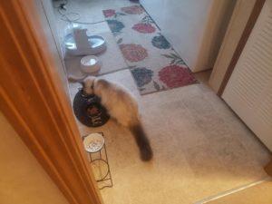 He's finally eating !